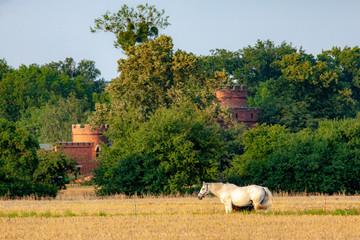 Pferde im Feld vor Burg