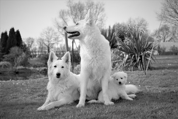 white dog family picture
