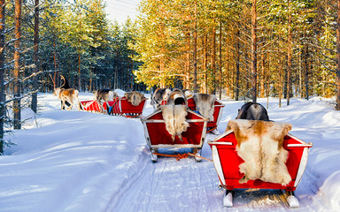 People on Reindeer sleigh in Finland in Rovaniemi at Lapland farm. Family on Christmas sledge at...