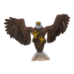 Fototapete - bald eagle attacking on white background bottom view