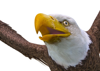 Fototapete - bald eagle on white background close up