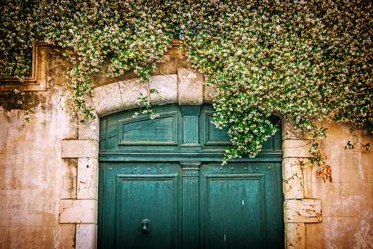 Vintage green door covered with ivy in Perpignan, France
