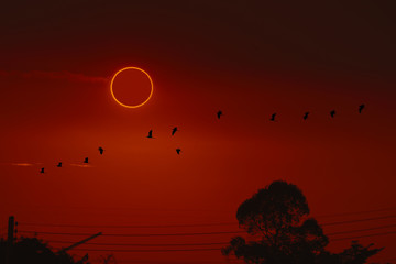 Foto auf Acrylglas Violett rot amazing phenomenon of total sun eclipse over silhouette birds flying on tree
