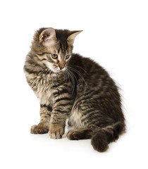 Sweet grey striped kitten sitting on a white background