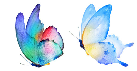 Fototapeta Two watercolor butterflies , isolated on white background obraz