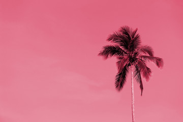 Foto auf Acrylglas Rosa Lovey Palm tree against a sky on a sunny day. Tropical background pink color toned