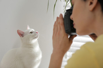 Professional animal photographer taking picture of beautiful white cat indoors, closeup
