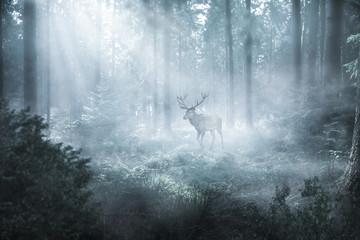 Deurstickers Hert Hirsch im nebeligen Wald