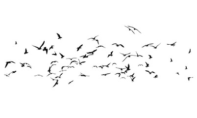 Wall Mural - Flock of birds on a white background