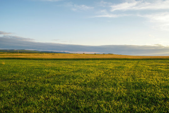 A picturesque panorama of a golden wheat field under the rays of the setting sun. Steppe landscape. Siberia.landscape. Siberia.
