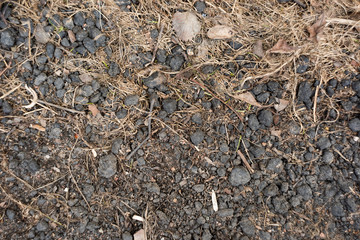 The land is dry with dirty clods