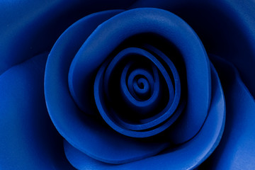 Blue rose close-up, classic blue background, toned, soft focus,blur.