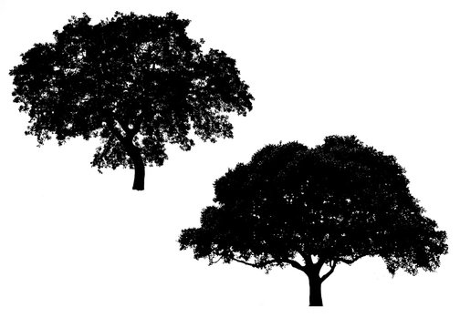 tree  silhouette, forest, Isolated tree on white background