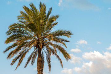 Detail of palm trees. Behind a sky with clouds