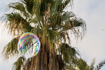 Detail of a soap bubble with a palm tree behind it