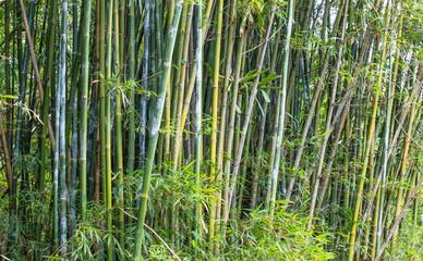 Fundo verde com bambu