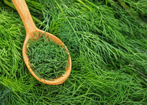 Dill weed. Fresh dill greens. Fennel  in wooden spoon