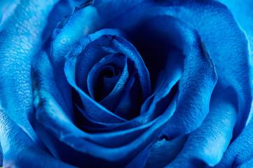 Foto op Plexiglas Macrofotografie Blue color rose background