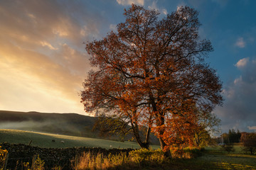 Fototapeten Schokobraun Stunning vibrant Autumn Fall landscape of countryside in Lake District with lovely golden light on trees and hills