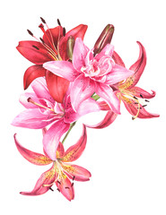 Elegant lily bouquet ,red white pink lilies on an isolated white background, watercolor stock illustration.