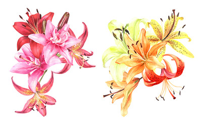 Elegant lily bouquet ,red yellow orange white pink lilies on an isolated white background, watercolor stock illustration.