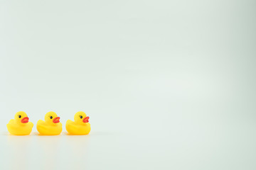 Yellow duck isolated in white background.