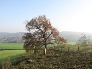 foggy autumn landscape with tree in the meadow