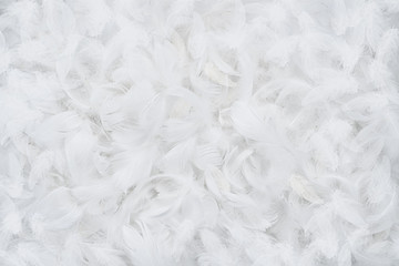 Abstract white feather background, texture with copy space