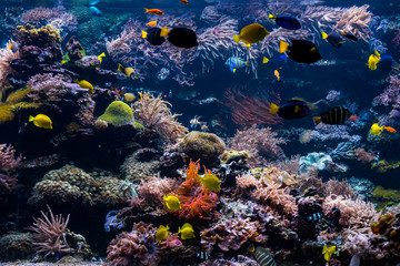 underwater coral reef landscape with colorful fish and marine life Wall mural