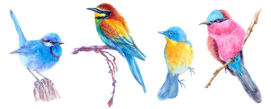 birds on white background