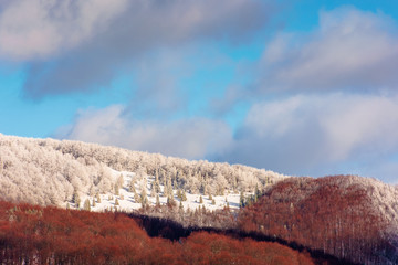winter scenery in mountains. beautiful view with forested slopes. leafless trees in snow and hoarfrost. dramatic afternoon weather with heavy clouds in warm dappled light