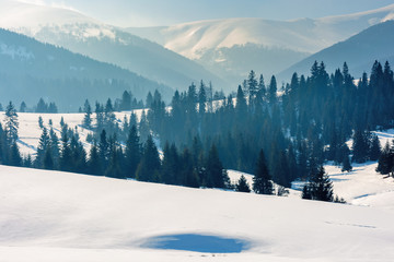 mountainous landscape in wintertime. gorgeous scenery on a bright sunny day. spruce forest on snow covered rolling hills. beautiful scenery of borzhava ridge