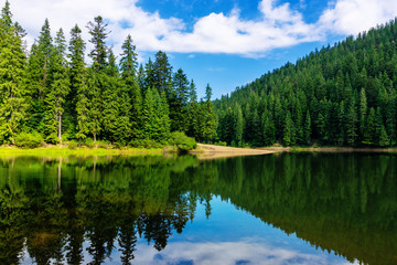 Fotobehang Bomen mountain lake in summertime. great outdoor nature scenery. coniferous forest with tall trees on the shore reflecting in clear water. deep blue sky with clouds. beautiful landscape