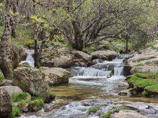 Spoed Fotobehang Bos rivier The Sunday Falls of the Aguilón or Navahondilla stream. Road to the Purgatorio waterfall in the Sierra de Guadarrama. Lozoya Valley Madrid's community.