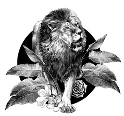 full-length lion walking on background composition of tropical plant leaves and flowers, sketch vector graphics monochrome illustration on white background
