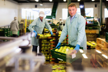 Male employee in blue uniform carrying box with fresh ripe apples selected on sorting line Fototapete