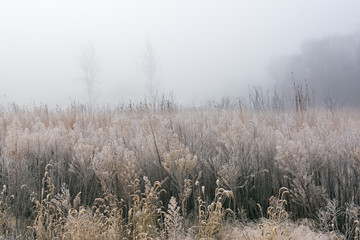 Frosted, Autumn Tall Grass Prairie in Fog, Fort Custer State Park Fotomurales