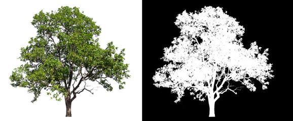 Foto auf Acrylglas Schwarz isolated tree on white background with clipping path