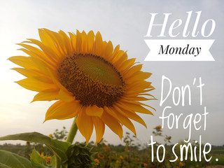 Inspirational quote - Hello Monday, do not forget to smile. With background of morning sun light and beautiful sunflower blossom in the garden closeup on bright blue sky. Monday greeting concept.