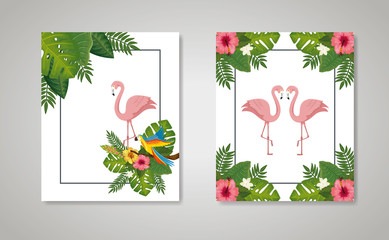 set scenes of flamingos pink animals with leafs nature vector illustration design