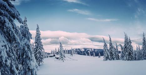 Foto op Plexiglas Blauwe jeans Sunny winter day in woodland