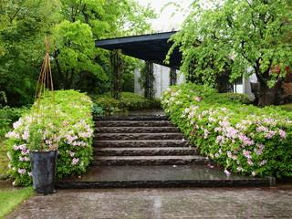 小雨降るツツジ咲く石段