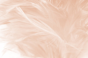Wall Mural - Beautiful white-brown feather texture background