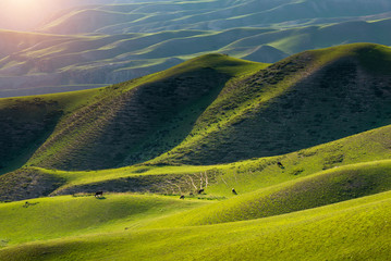Poster Groen blauw Beautiful landscape of alpine meadows in mountain ranges