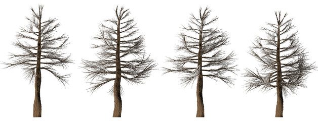 Trees forest set isolated on white background in winter season. High-quality free stock image of collection Silhouette of pine, spruce isolated on white background. Good design elements, illustration
