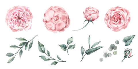 Set of watercolor graphics roses peonies and plant branches. For design fabric, poster or card. Botanical illustration.