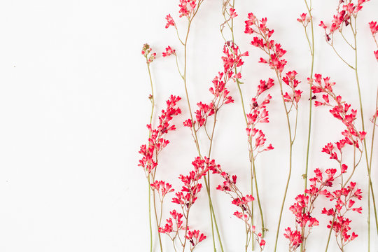 Red wildflowers pattern on white background.