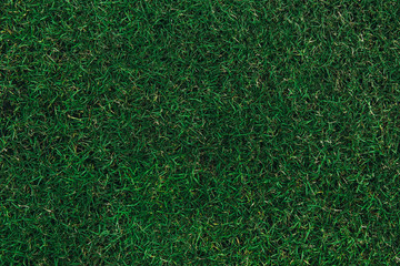 Tuinposter Gras Top view of green grass texture with water at football or soccer stadium.