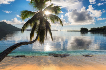 Wall Mural - Exotic beach at sunrise with coco palm and the turquoise ocean on Paradise island. Praslin, Seychelles