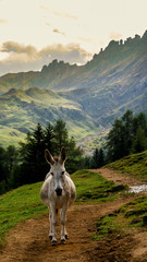 Fotobehang Ezel Donkey in front of mountains and green grass with long trail